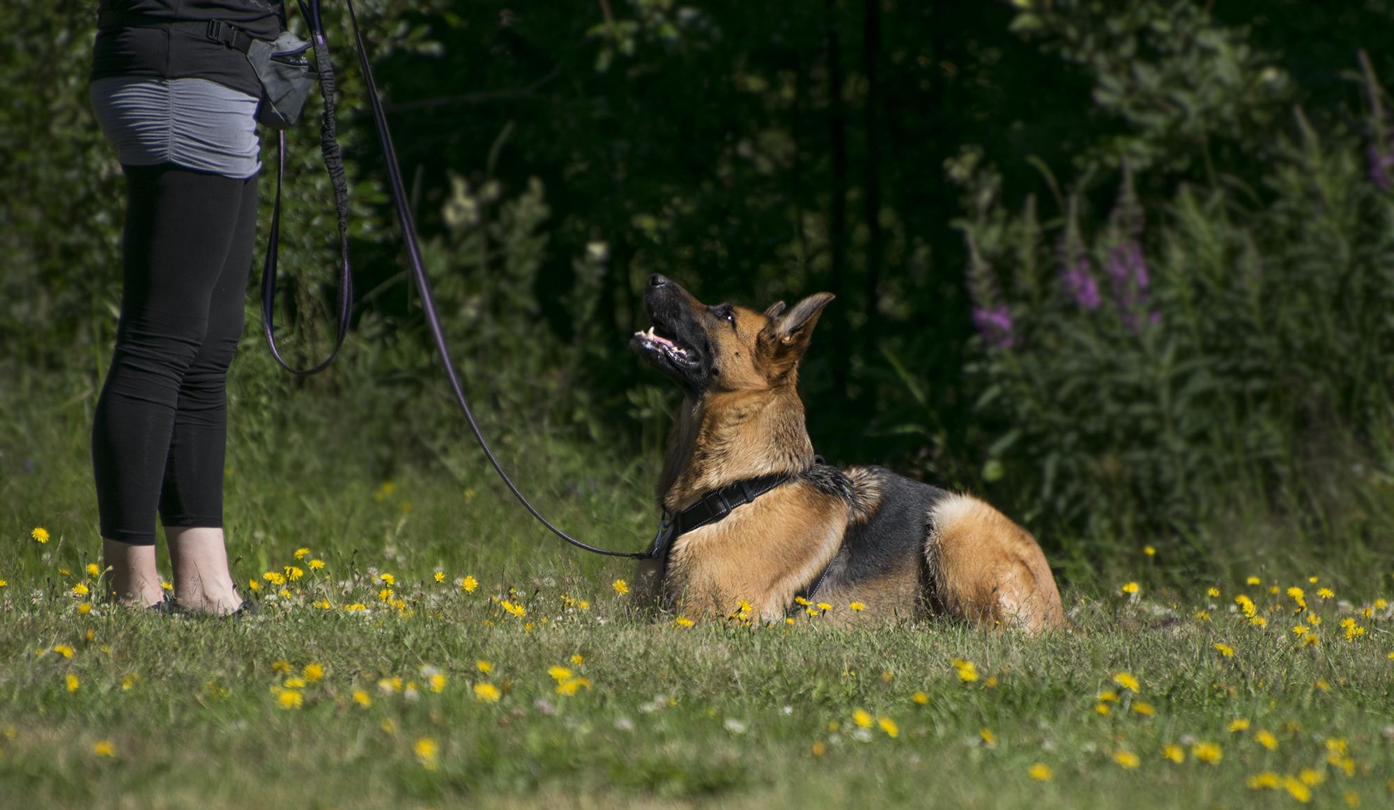 Ulvens – för dig och din hund